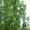 Продам земельный участок Винница-с. Лавровка, срочно! - Изображение #6, Объявление #326333