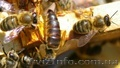 Продаю пчелопакеты по 600 грн. та пчелосемьи по 130 грн.за рамку
