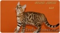 Бенгальские котята для дома и разведения