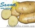Картофель семенной Ривьера, Тирас и другие со склада в Виннице  - Изображение #7, Объявление #1302490