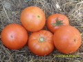 Продам семена томатов.