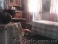 Сдается в аренду дом с.лучинчик.винницкая обл. - Изображение #2, Объявление #1320637